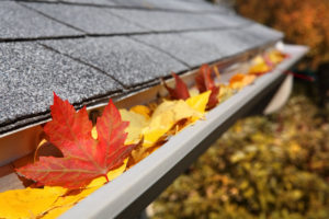 leaves-in-gutter